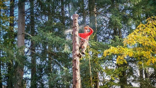 élagage arbre toulouse